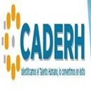 Organization logo: Centro Asesor para el Desarrollo de los Recursos Humanos (CADERH)